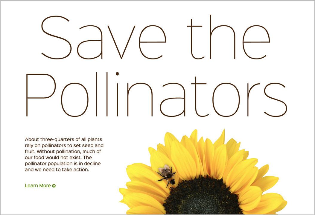 Website design for Save The Pollinators, a website that I created to educate the public about pollinators